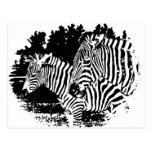 zebras post cards
