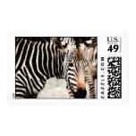 Zebras Postage