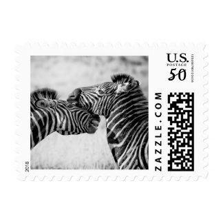 Zebras Postage Stamps