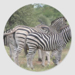 Zebras Round Sticker