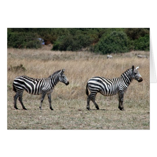 zebras stand card
