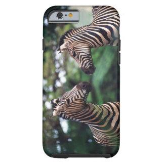 zebras tough iPhone 6 case