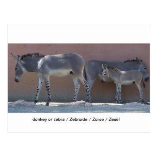 Zebroide Postcard