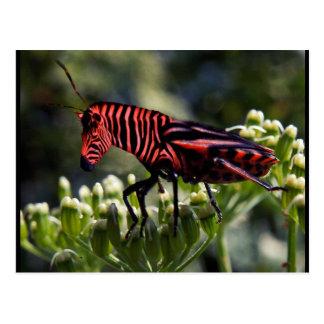 Zebug postcard