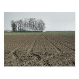 Zeeland-Just Sowed Postcards