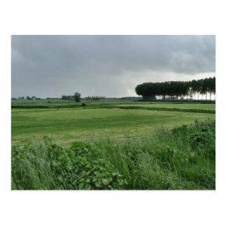 Zeeland-Summer green Post Card