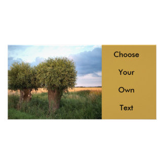 Zeeland-Two Willow Trees Photo Card