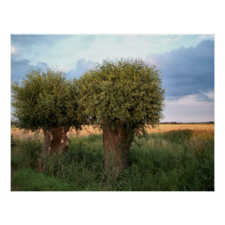Zeeland-Two Willow Trees Posters