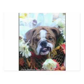 Zelda Daisy Postcard