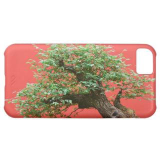 Zelkova bonsai tree iPhone 5C cases