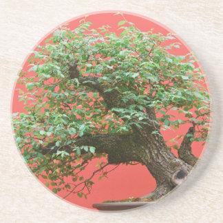 Zelkova bonsai tree beverage coaster