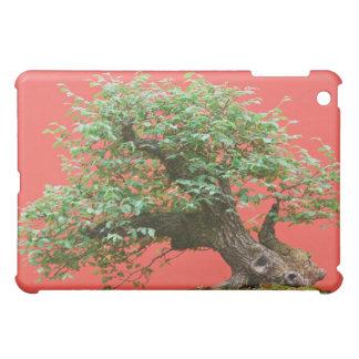 Zelkova bonsai tree iPad mini cases