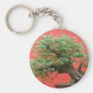 Zelkova bonsai tree basic round button keychain