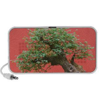 Zelkova bonsai tree laptop speaker