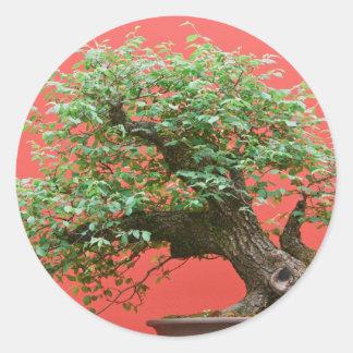 Zelkova bonsai tree classic round sticker