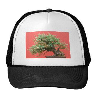 Zelkova bonsai tree trucker hat