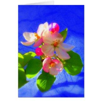 Zen Blossoms Card card