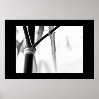 Zen de bambú posters