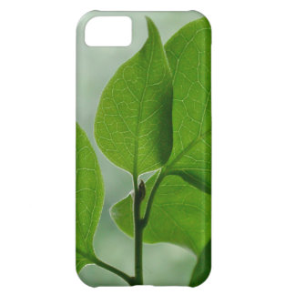 Zen Green iPhone 5C Cover For iPhone 5C
