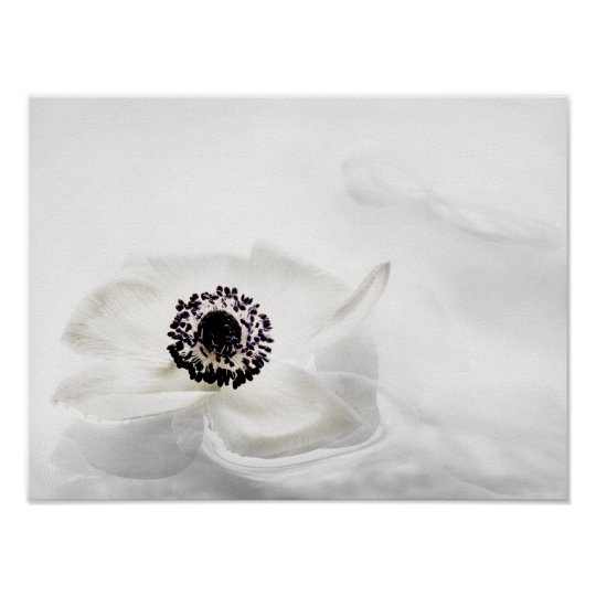Zen High Key White Anemone on Water Background Poster