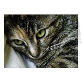 Zen Kitty Card