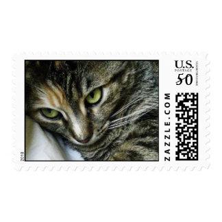 Zen Kitty Postage