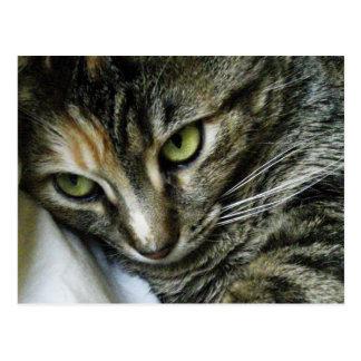 Zen Kitty Postcard