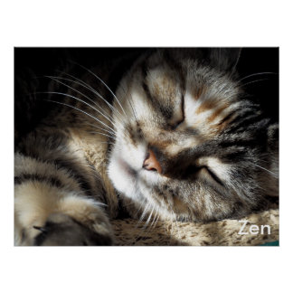 Zen Kitty Poster