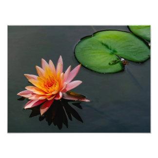 Zen Lilypad Photo Print