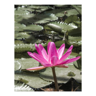 Zen Lotus Flower Pond Letterhead