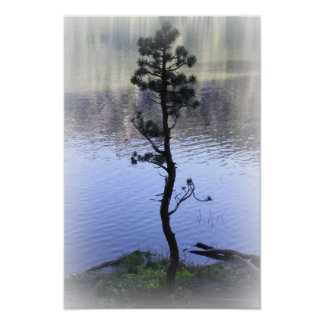 Zen Reflection- Water and Tree Poster
