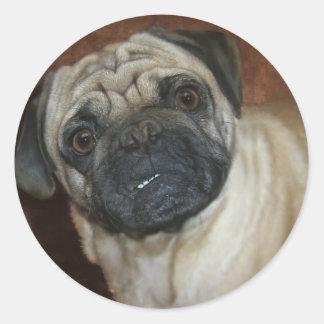 Zena the Pug Classic Round Sticker
