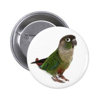 Zeph (conure verde) de la mejilla - botón