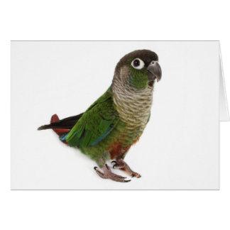 Zeph (green cheek conure) - Greeting Card 1