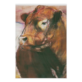 Zeus Red Belted Galloway Bull 2006  2 Poster