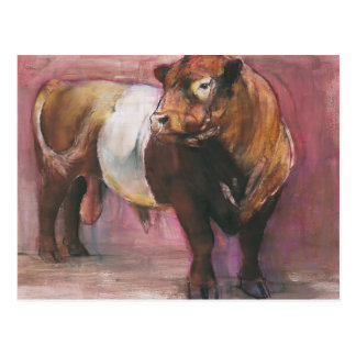 Zeus Red Belted Galloway Bull 2006 Postcard