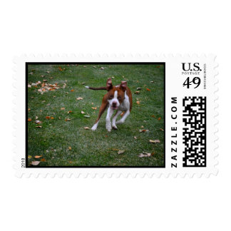 Ziggy in Chase Stamp