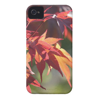 Ziggy The japanese maple IPhone 4 cover