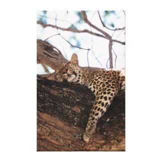 Zimbabwe, Mana Pools National Park, Leopard Canvas Print
