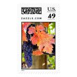 Zinfandel Postage Stamp