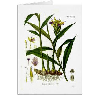 Zingiber officinalis (ginger) greeting card