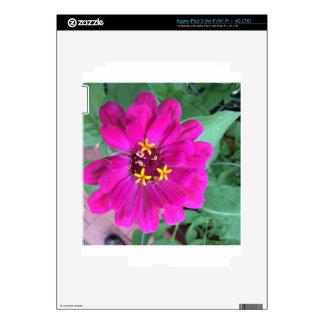 Zinnia 4 iPad 3 pegatinas skins