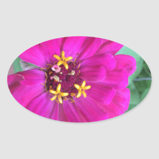Zinnia 4 oval sticker