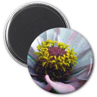Zinnia Bloom Inside Pastel Pink Magnet