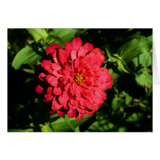 """zinnia"" by Larry Coressel Card"