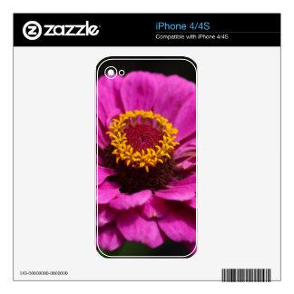 Zinnia común (elegans del Zinnia) Calcomanía Para El iPhone 4