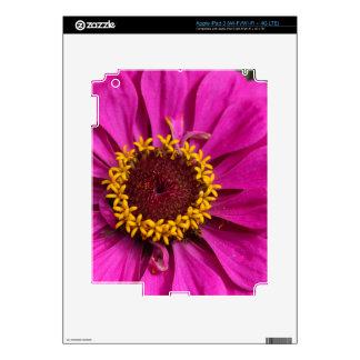 Zinnia común (elegans del Zinnia) iPad 3 Skins