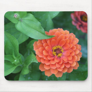 Zinnia Flowers Stages of Life Mousepad
