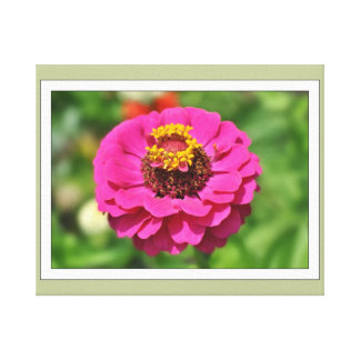 Zinnia Fower 4 Gallery Wrapped Canvas