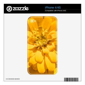 Zinnia iPhone 4 Calcomanías